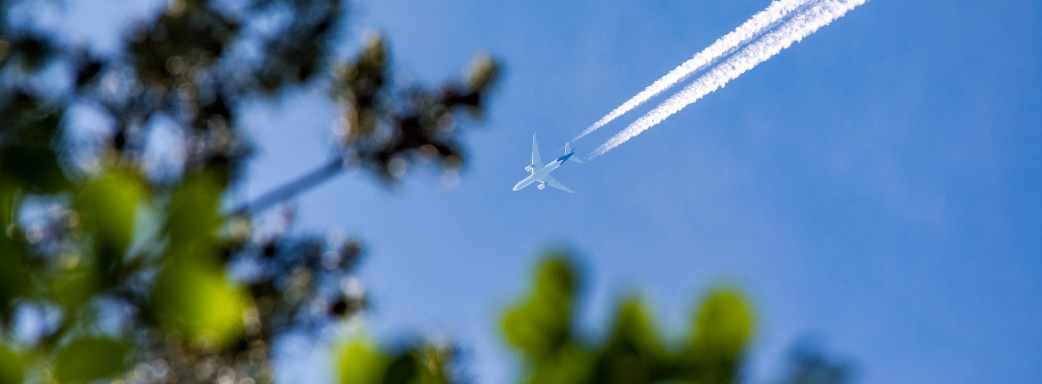 Flugzeug fliegt über Wald